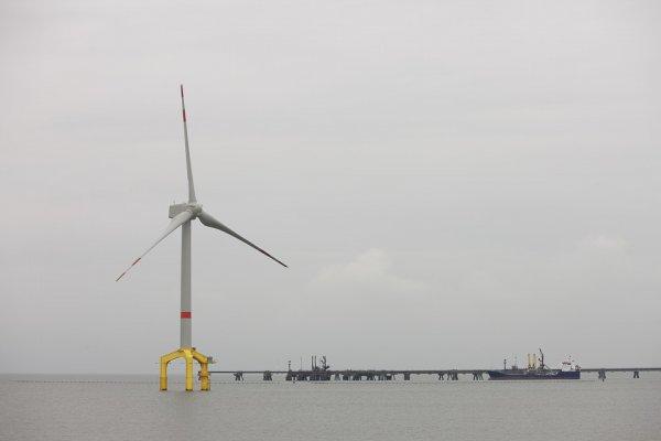 """国内首个""""海上风电+海洋牧场""""示范项目即将在山东开建"""